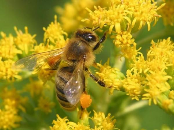 аллергия-на-пыльцу (1)