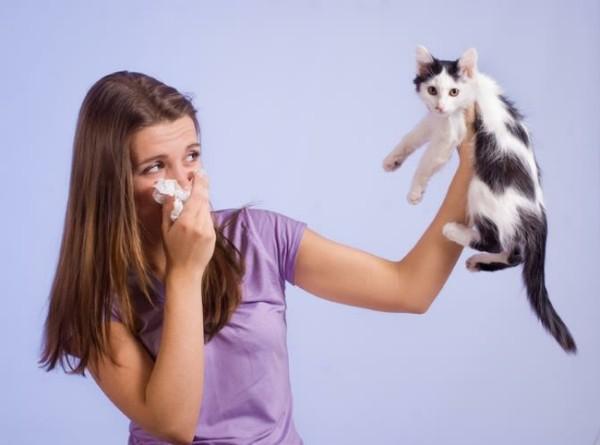 allergija-na-sherst-zhivotnyh