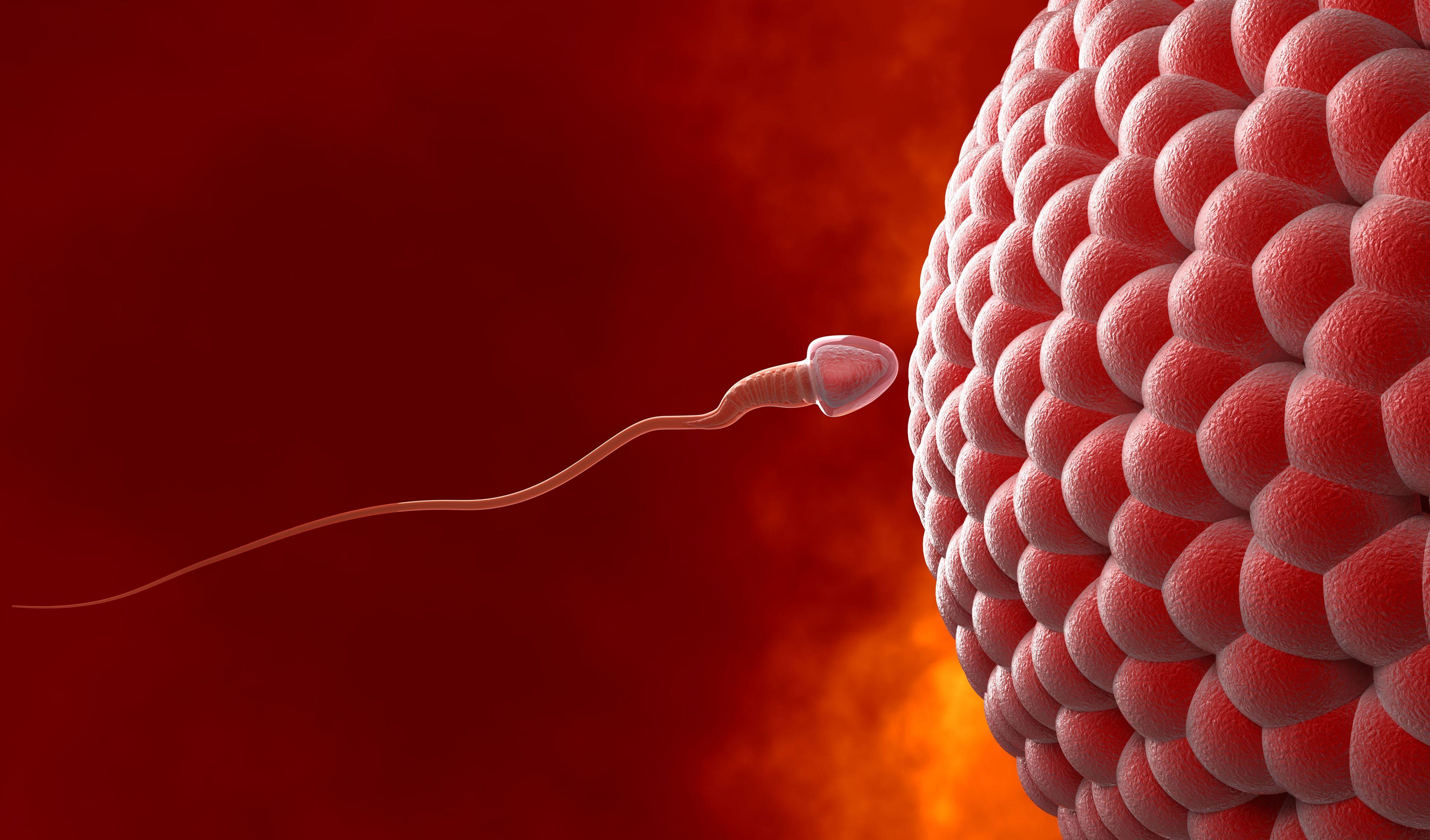 chto-neset-v-sebe-spermatozoid