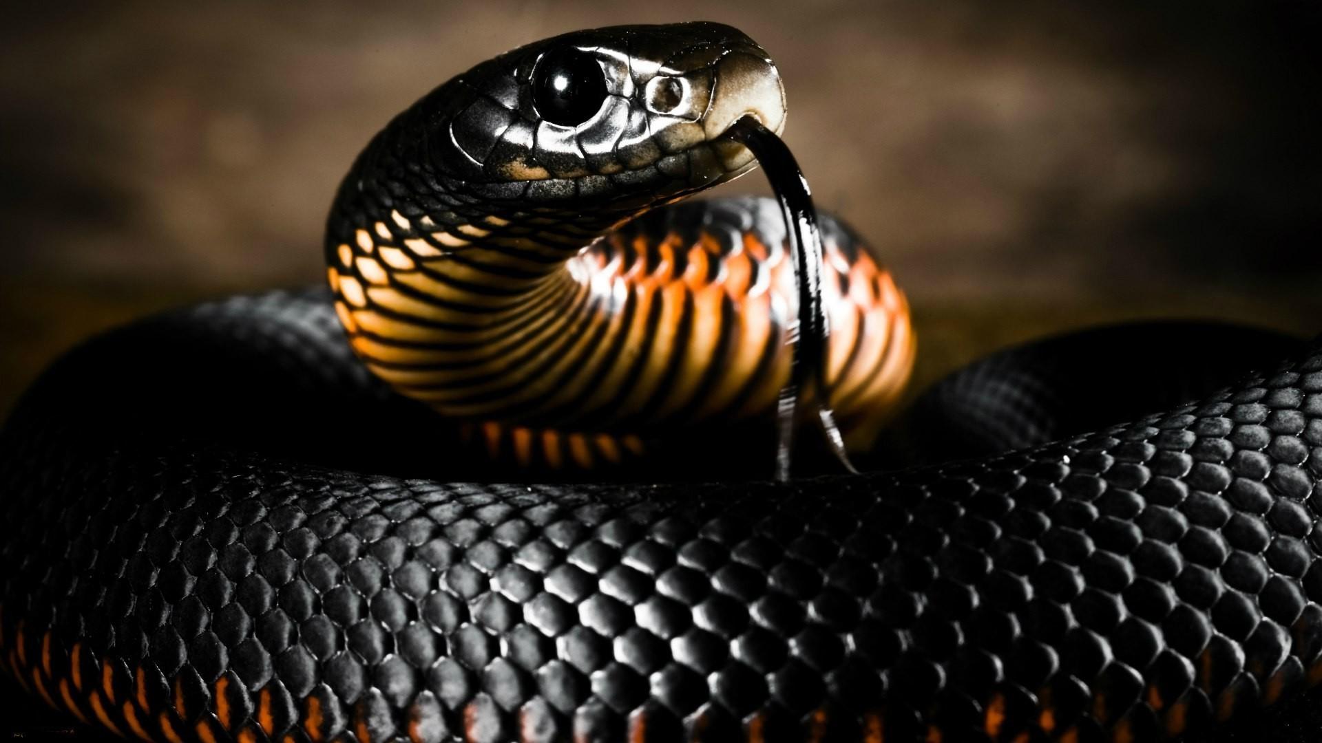 них не боа из эфа что ужвий мамба змея