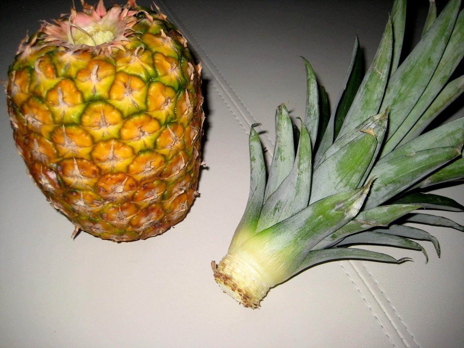 Как ухаживать за ананасом в домашних условиях 5