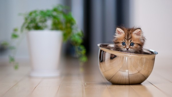 Animals___Cats_Funny_kitten_in_a_bowl_046834_23