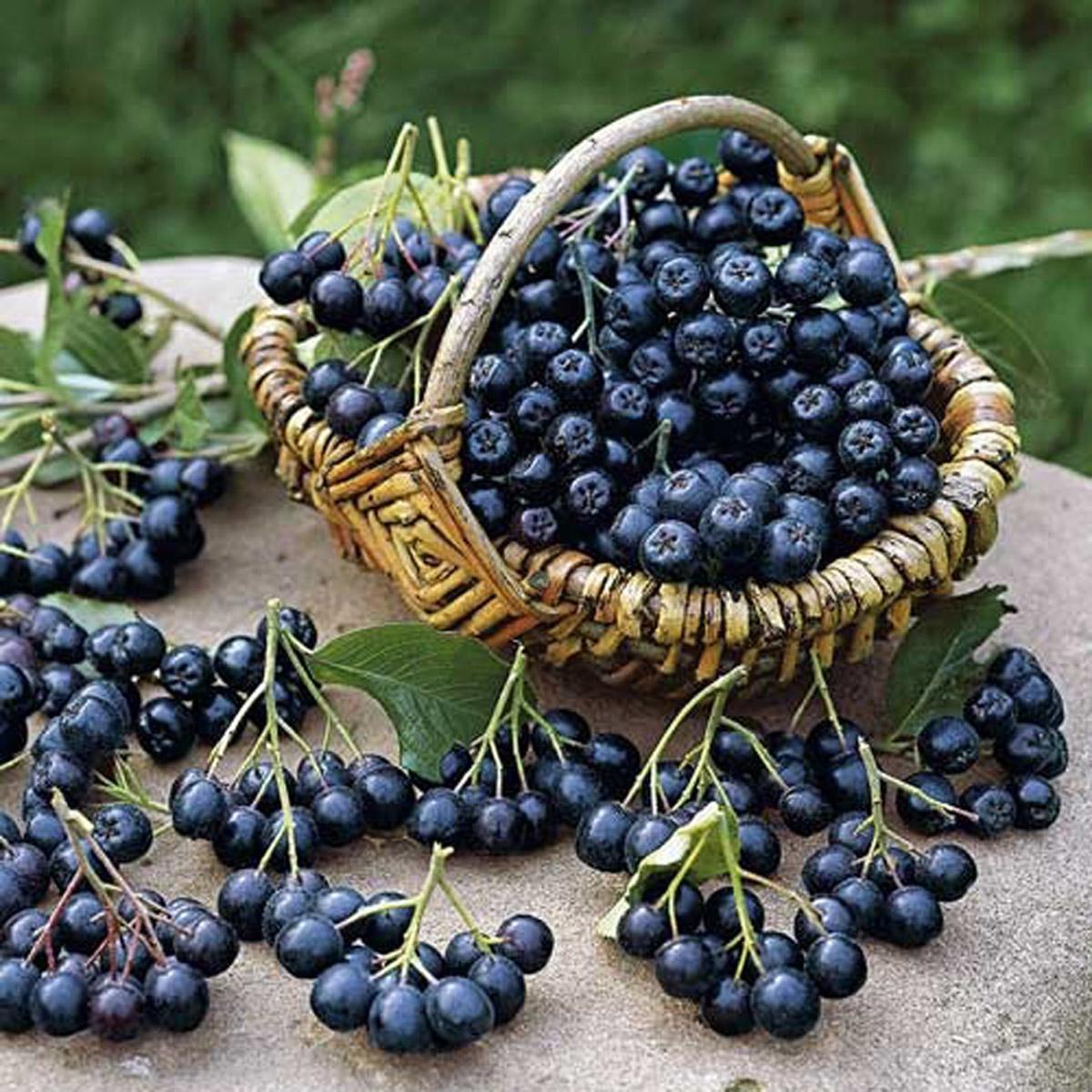 черноплодная рябина рецепты выпечка