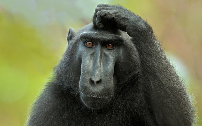 Живая природа семейные пары обезьян секс человека и обезьяны