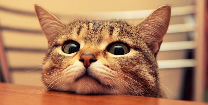Отношения кота и петуха