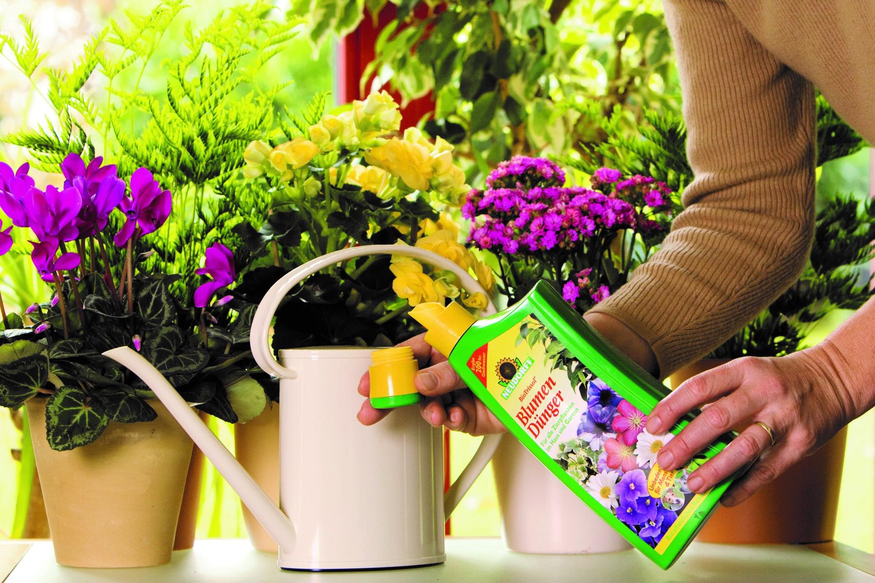 Чем поливать цветы в домашних условиях 576