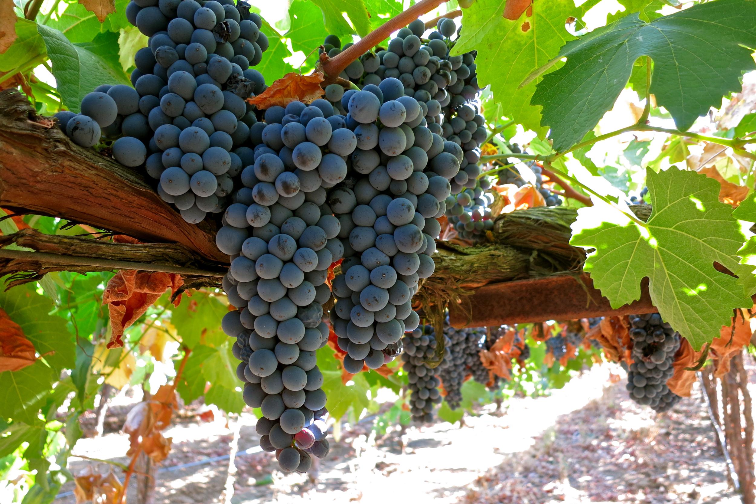 вкусные салаты с виноградом рецепты с фото