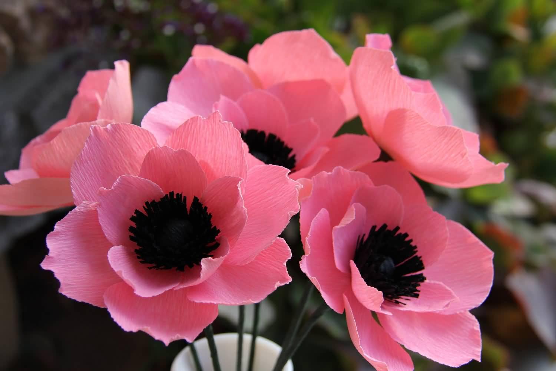 Анемоны цветы название и фото