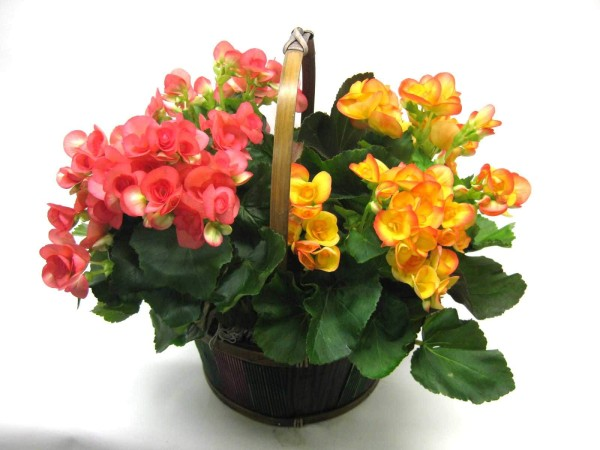 Lovely-Begonia-Flower-Bouquet