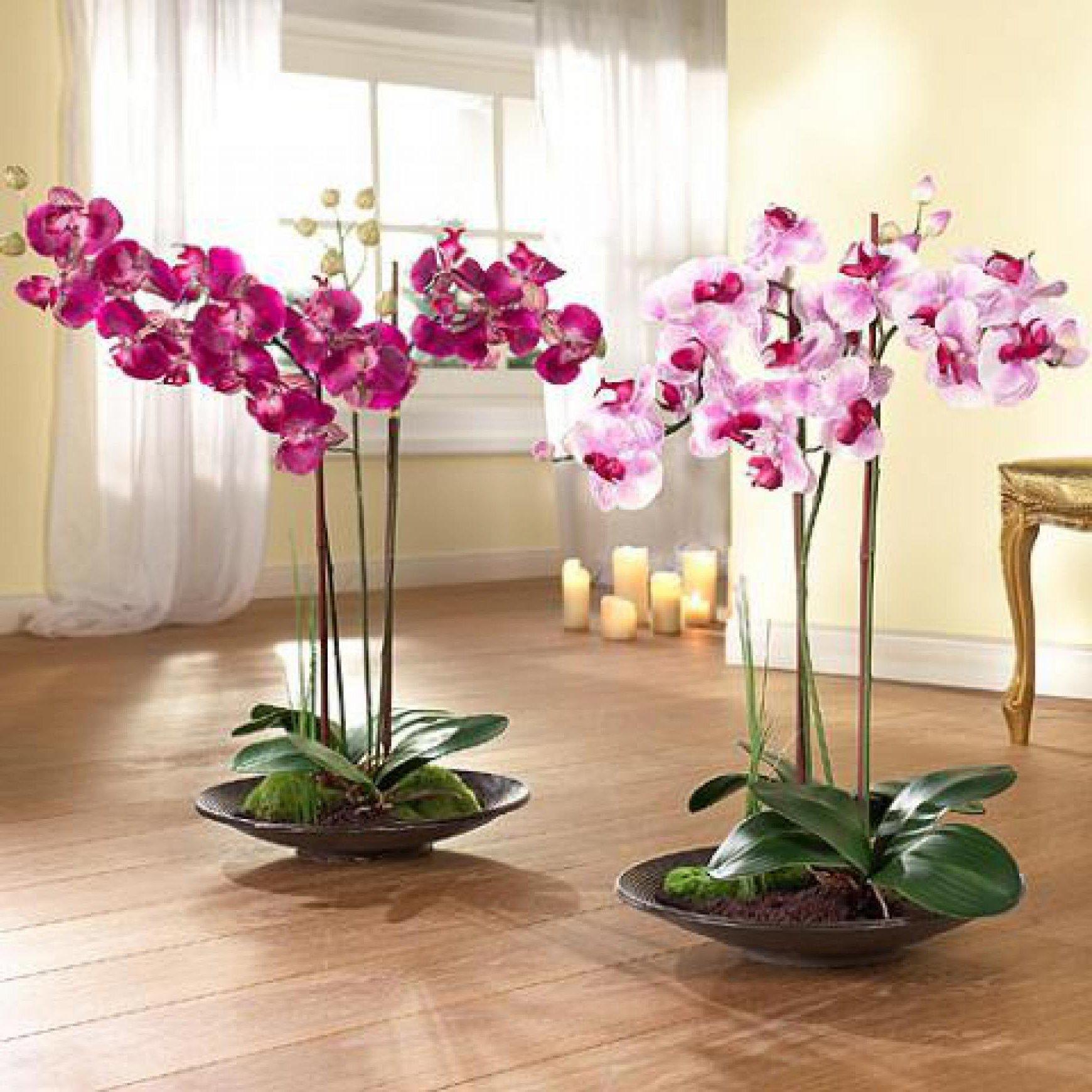 Выращивание орхидеями в домашних условиях