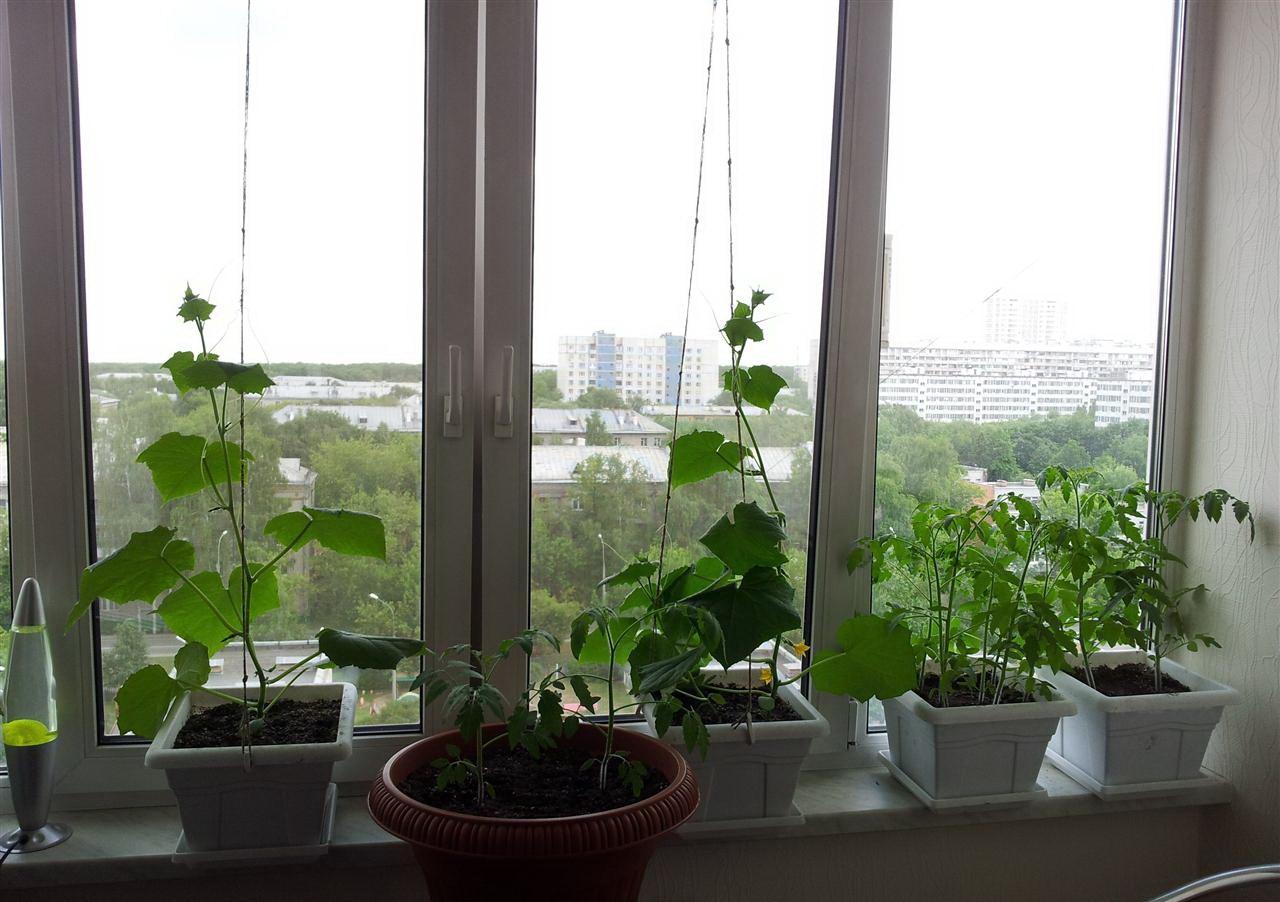 Как выращивать огурцы. несколько способов выращивания огурцо.