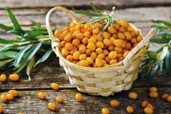 berries of an organic sea-buckthorn in a basket. style rustic. selective focus
