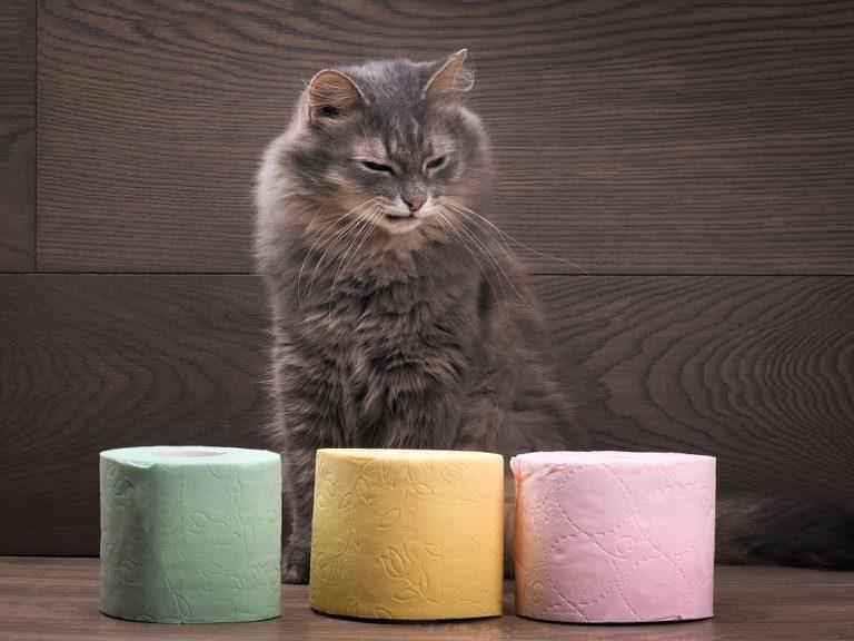 Понос у кота причины лечение