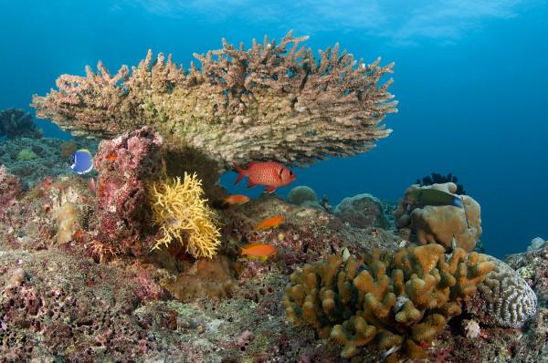 Maldives-Baa-Atoll-Hanifaru-Bay4(flickr.com-Amnesia71)