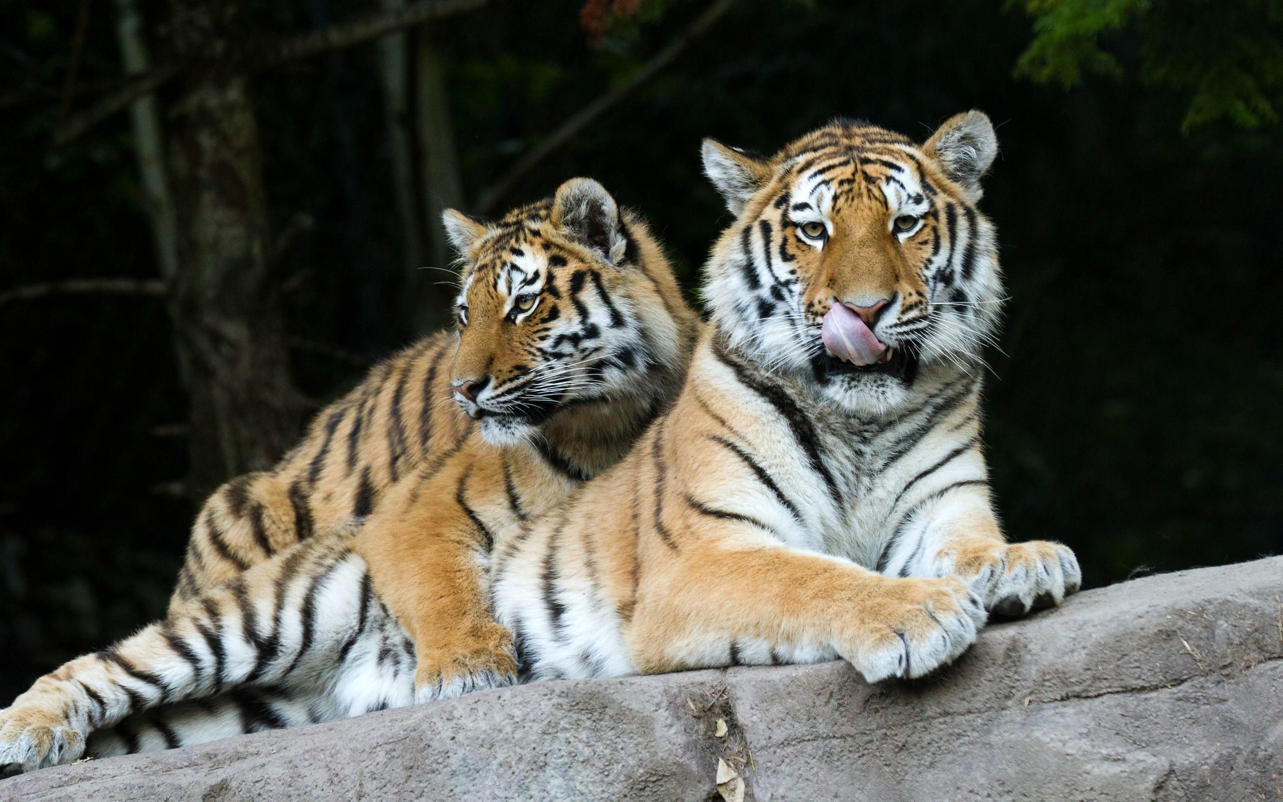 Секс мужчины тигра