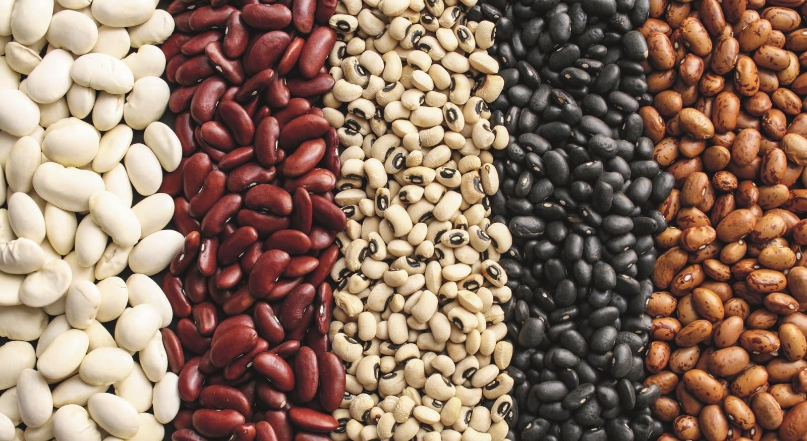 Фасоль – полезные свойства и противопоказания